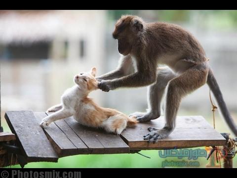 بالصور صور مضحكة , صور مضحكة للفيس بوك صور للضحك 4218 5