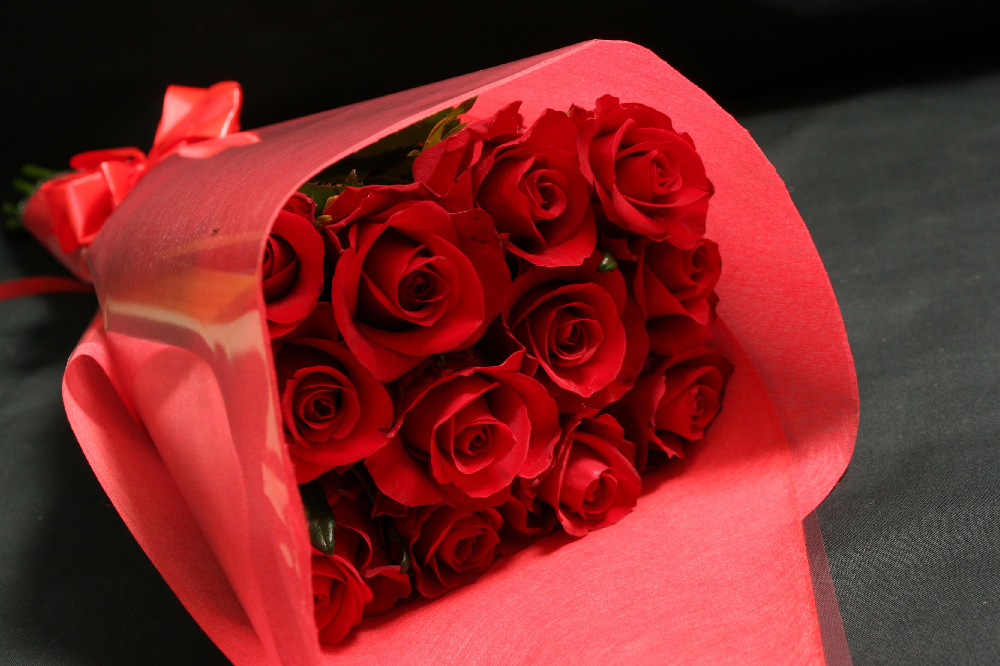 بالصور صور الورد , صورة ورد في غاية الجمال 4260 3