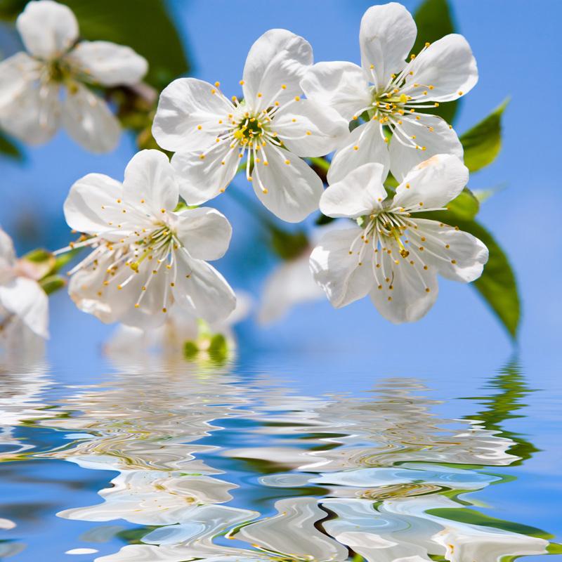 بالصور صور الورد , صورة ورد في غاية الجمال 4260 5