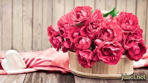 بالصور صور الورد , صورة ورد في غاية الجمال 4260 8