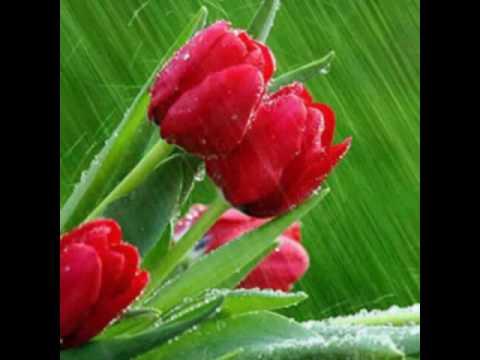بالصور صور ورد احمر اجمل صور الورد الاحمر ورود حلوة , خلفيات زهور ملونه 4458 3