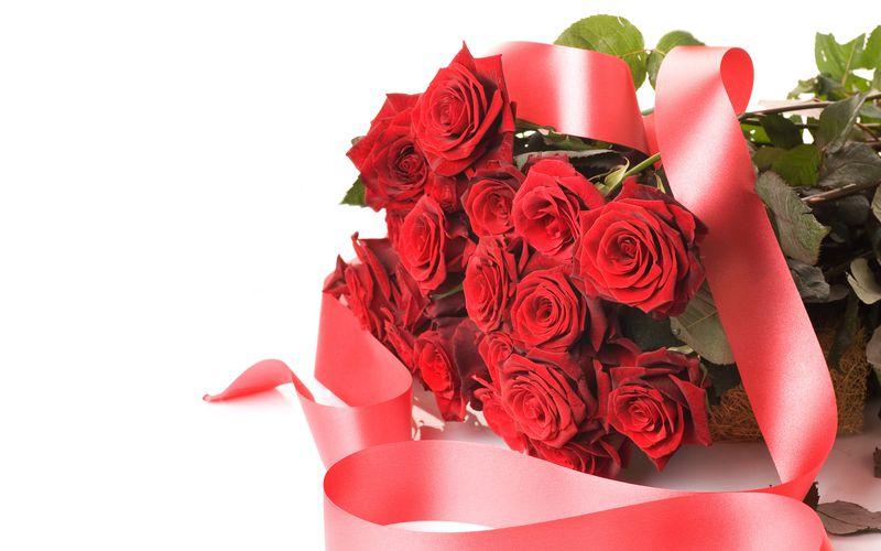 بالصور صور ورد احمر اجمل صور الورد الاحمر ورود حلوة , خلفيات زهور ملونه 4458 5
