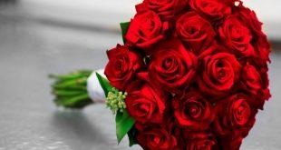 صور صور ورد احمر اجمل صور الورد الاحمر ورود حلوة , خلفيات زهور ملونه