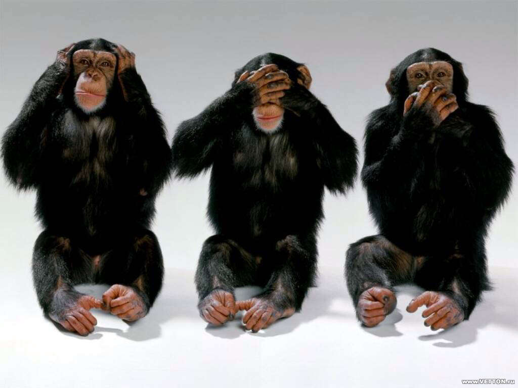 بالصور صور القرود اجمل صور القرود صور قرود مضحكة , خلفيات للشمبانزي روعه 4504 4