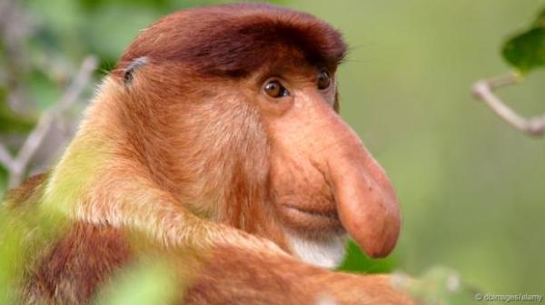 صوره صور القرود اجمل صور القرود صور قرود مضحكة , خلفيات للشمبانزي روعه
