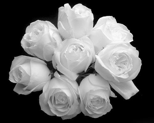 بالصور صور ورد ابيض اجمل صور ورود بيضاء متحركة صور زهور و ورد باللون الابيض . بوكيه للورود باللون الابيض 4563 3
