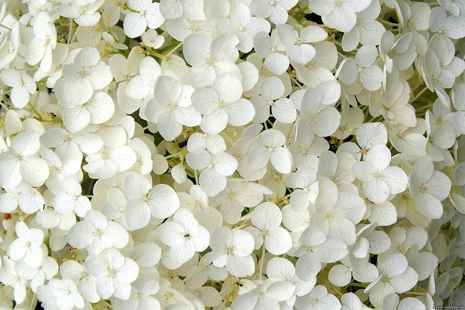 بالصور صور ورد ابيض اجمل صور ورود بيضاء متحركة صور زهور و ورد باللون الابيض . بوكيه للورود باللون الابيض 4563 6