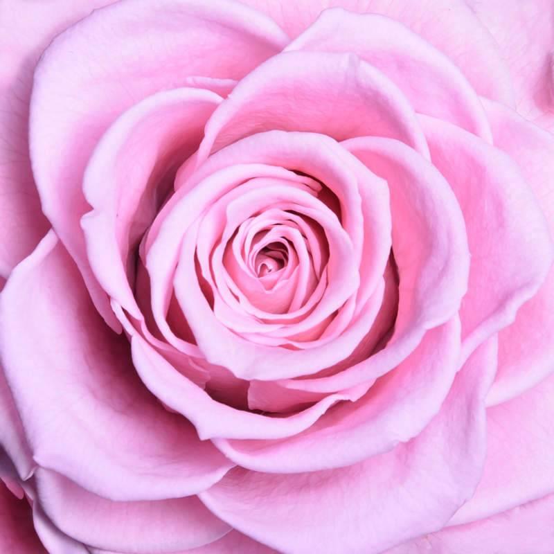 صوره صور ورود من اروع خلفيات سطح المكتب خلفيات رومانسية من اجمل صور لسطح المكتب , بوستات للزهور المميزة