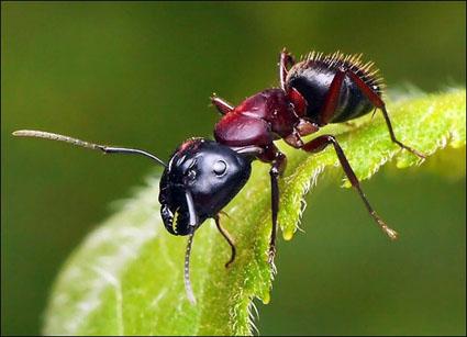 صور النمل فى الحلم , النمل في الحلم