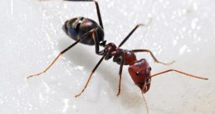 النمل فى الحلم , النمل في الحلم