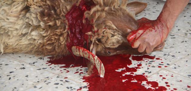 صورة حلم ذبح خروف
