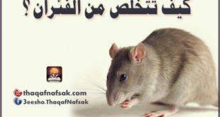 بالصور كيفية التخلص من الفئران نهائيا , طرق كيفية التخلص من الفئران نهائيا 11345 3 310x165