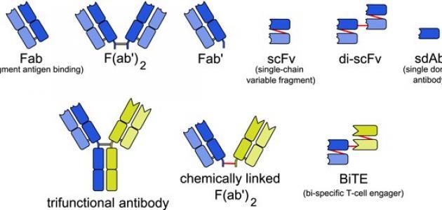 صورة تحليل الاجسام المضاده , مفهوم تحليل الاجسام المضاده