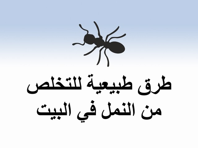 صور كيفية التخلص من النمل , طرق كيفية التخلص من النمل