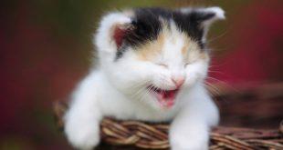 بالصور صور مضحكة للقطط , احلي صور مضحكة للقطط 11419 14 310x165