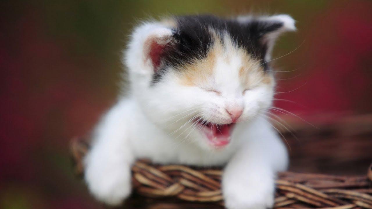 صور صور مضحكة للقطط , احلي صور مضحكة للقطط