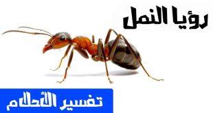 النمل الاحمر في البيت , الحشرات الصغيره والتخلص منها