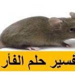 الفار في المنام لابن سيرين , فوبيا الفئران تراودك في الاحلام