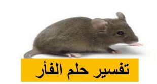 صور الفار في المنام لابن سيرين , فوبيا الفئران تراودك في الاحلام