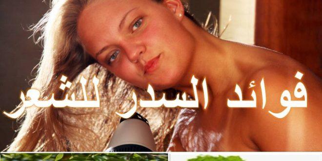 صورة طريقة غسل الشعر بالسدر , فوائد شجره السدر للشعر