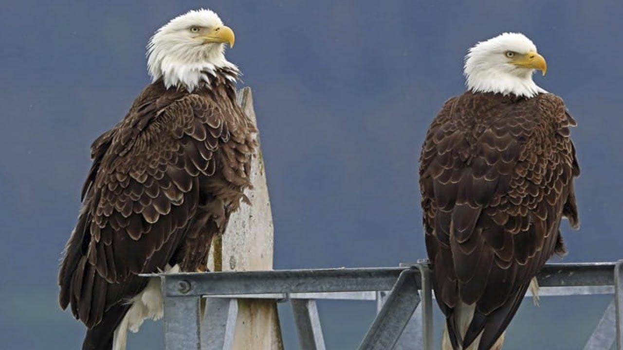 صورة الفرق بين الصقر والنسر , النسر والصقر طيور لها عظمة تعرف على الفرق بينهما 12523