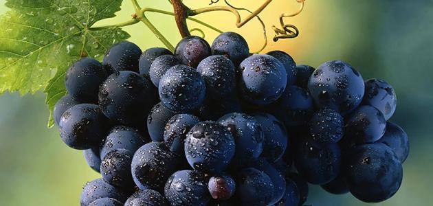 صورة فوائد عصير العنب الاسود, العنب الاسود للصحه مهم جدا