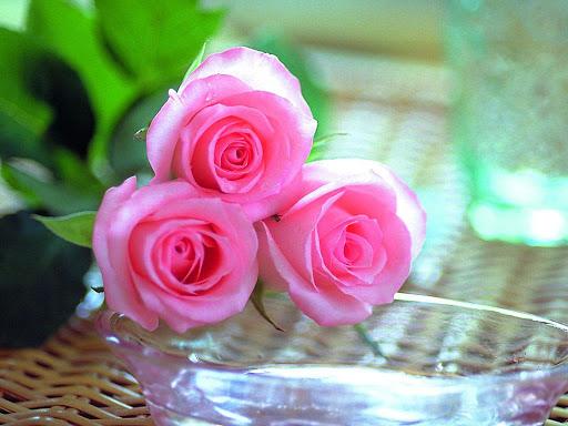 صورة اجمل صور الورود, اجمل الورود فى العالم 12754 1