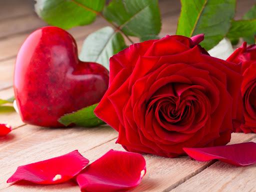 صورة اجمل صور الورود, اجمل الورود فى العالم 12754 3