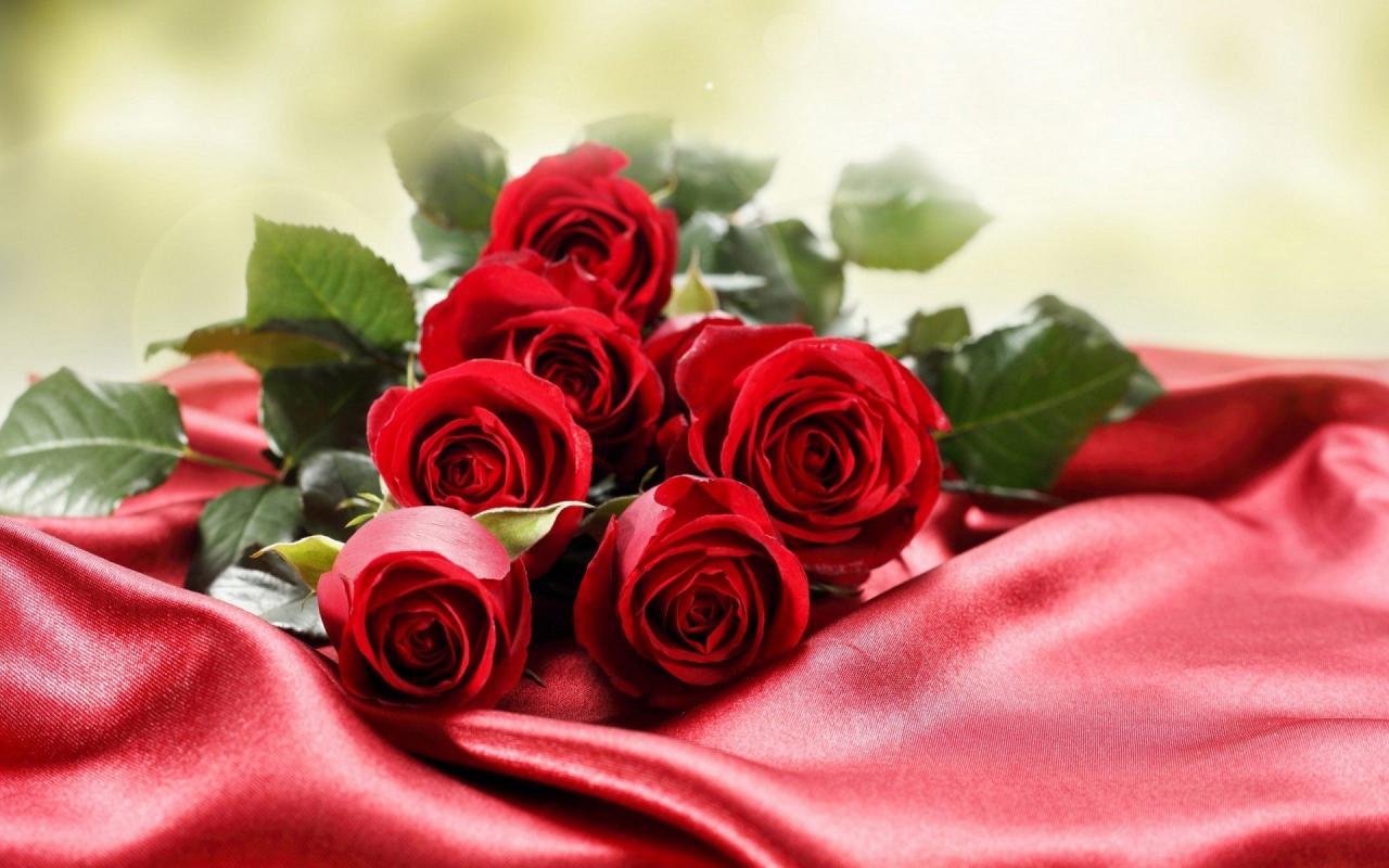 صورة اجمل صور الورود, اجمل الورود فى العالم 12754 5