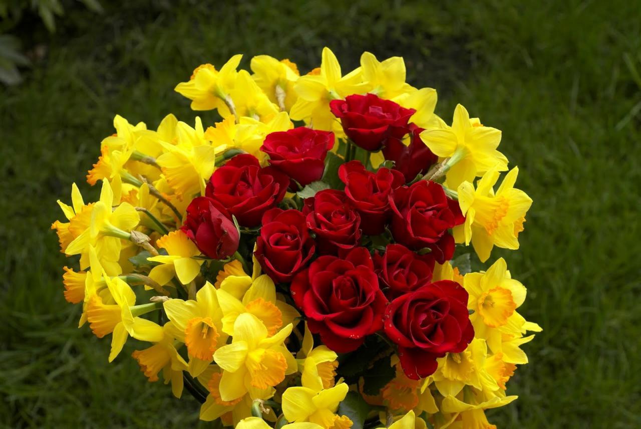 صورة اجمل صور الورود, اجمل الورود فى العالم 12754 7