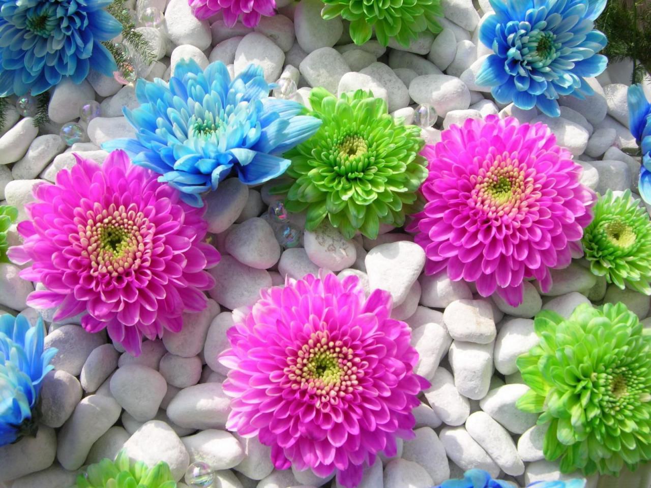 صورة اجمل صور الورود, اجمل الورود فى العالم 12754 8