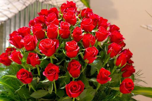 صورة اجمل صور الورود, اجمل الورود فى العالم 12754